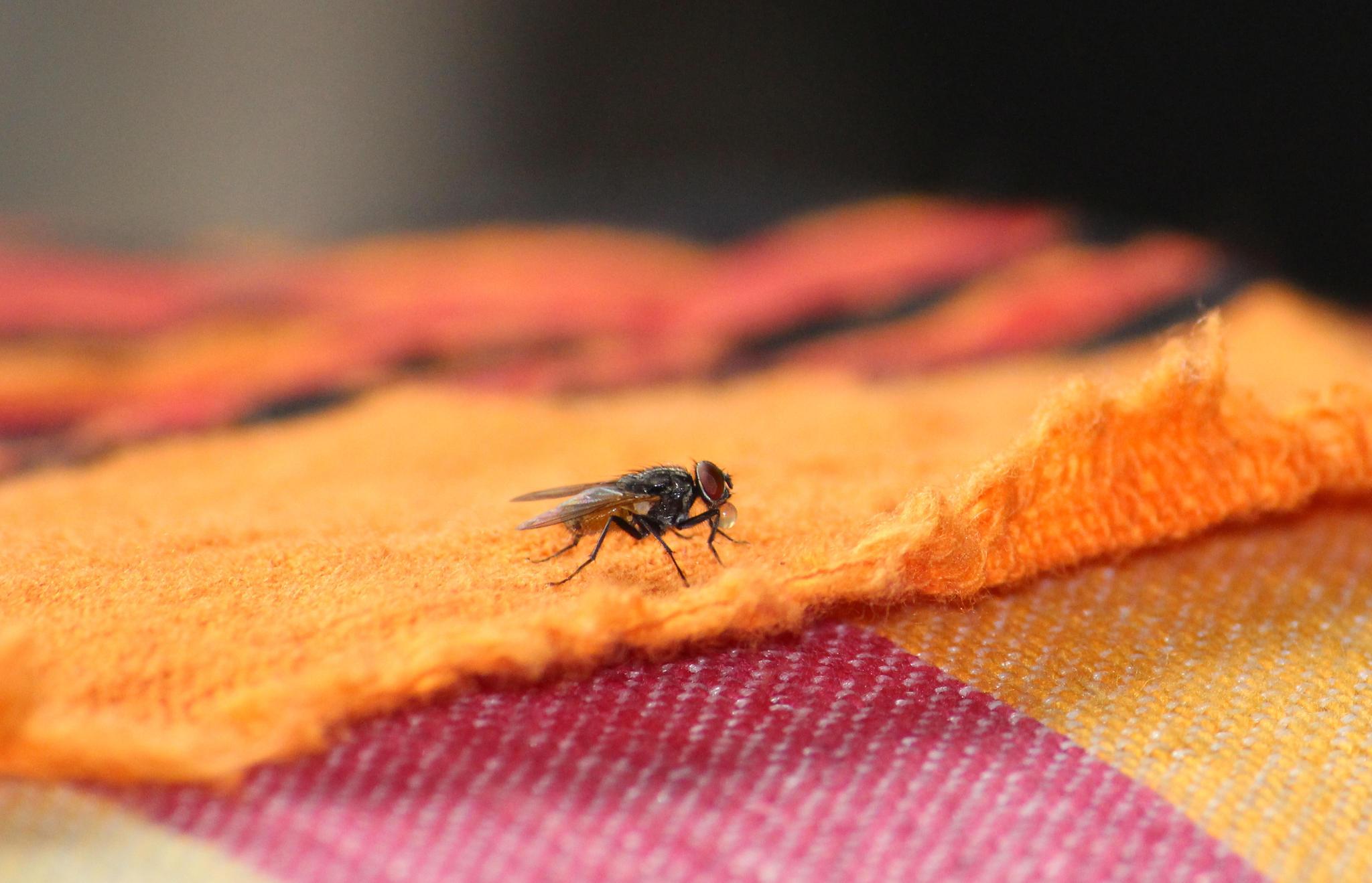 Hausmittel Gegen Fliegen So Wirst Du Die Plagegeister Los Brigittede