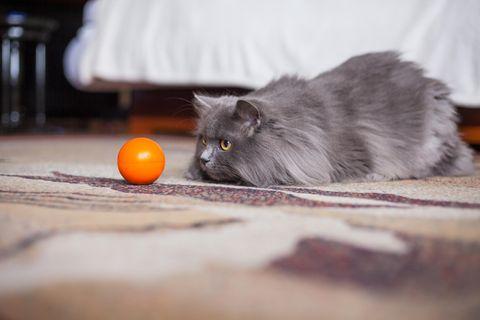 Einfach irre - diese Katze hat ein Gesicht wie ein Mensch!