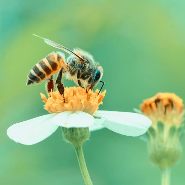 So kannst du Bienen in Not helfen