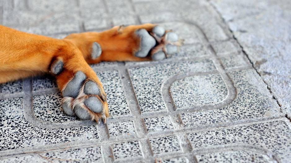 Hunde bei Hitze: Darauf müssen Tierhalter unbedingt achten!