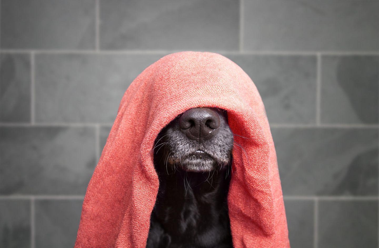 Hitzetipps der Redaktion: Hund mit Handtuch auf dem Kopf