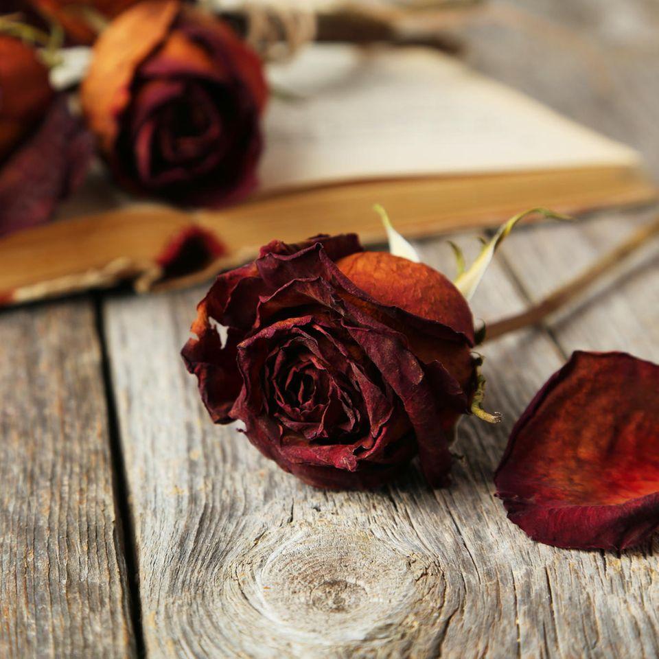 Rosen trocknen – rote getrocknete Rosen