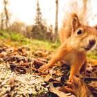 Karlsruhe: Ein süßes Eichhörnchen