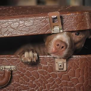 Reddit: Mann schmuggelt Hund in Klinik, damit Frau Abschied nimmt – Hund im Koffer