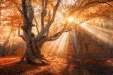 Herbst-Ideen: Die Natur ist in goldenes Licht getaucht