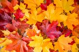 Herbst-Ideen: buntes Herbstlaub