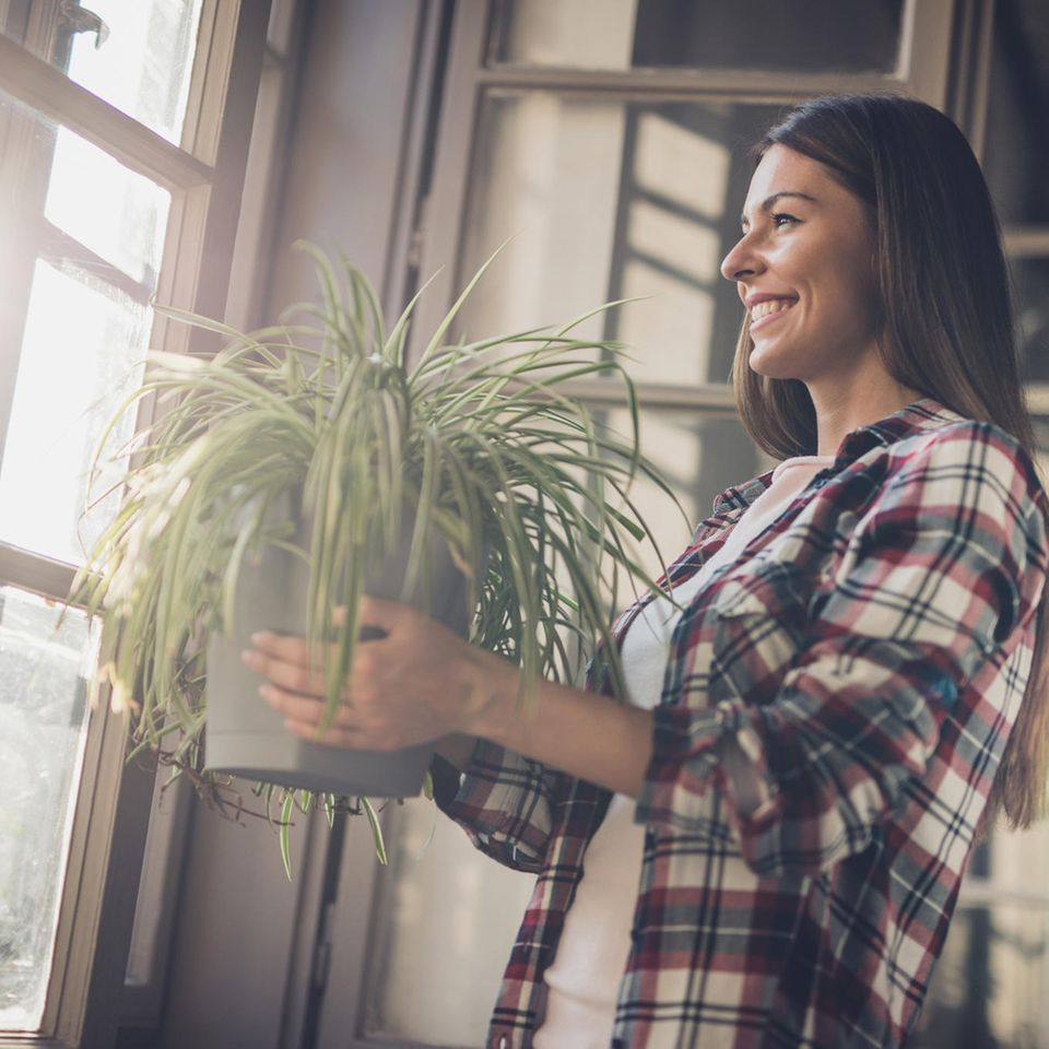Du willst gesund leben? Dann kauf dir eine dieser Zimmerpflanzen!