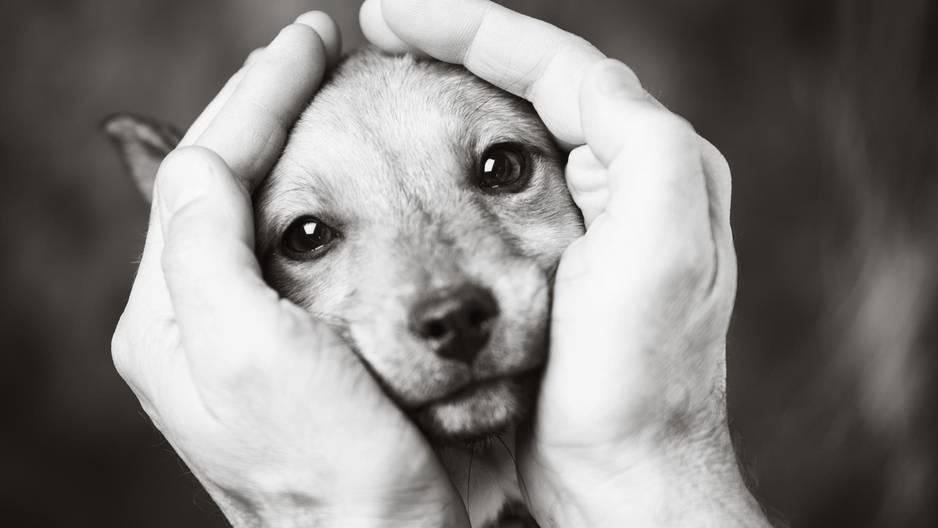 Trauer und Hund