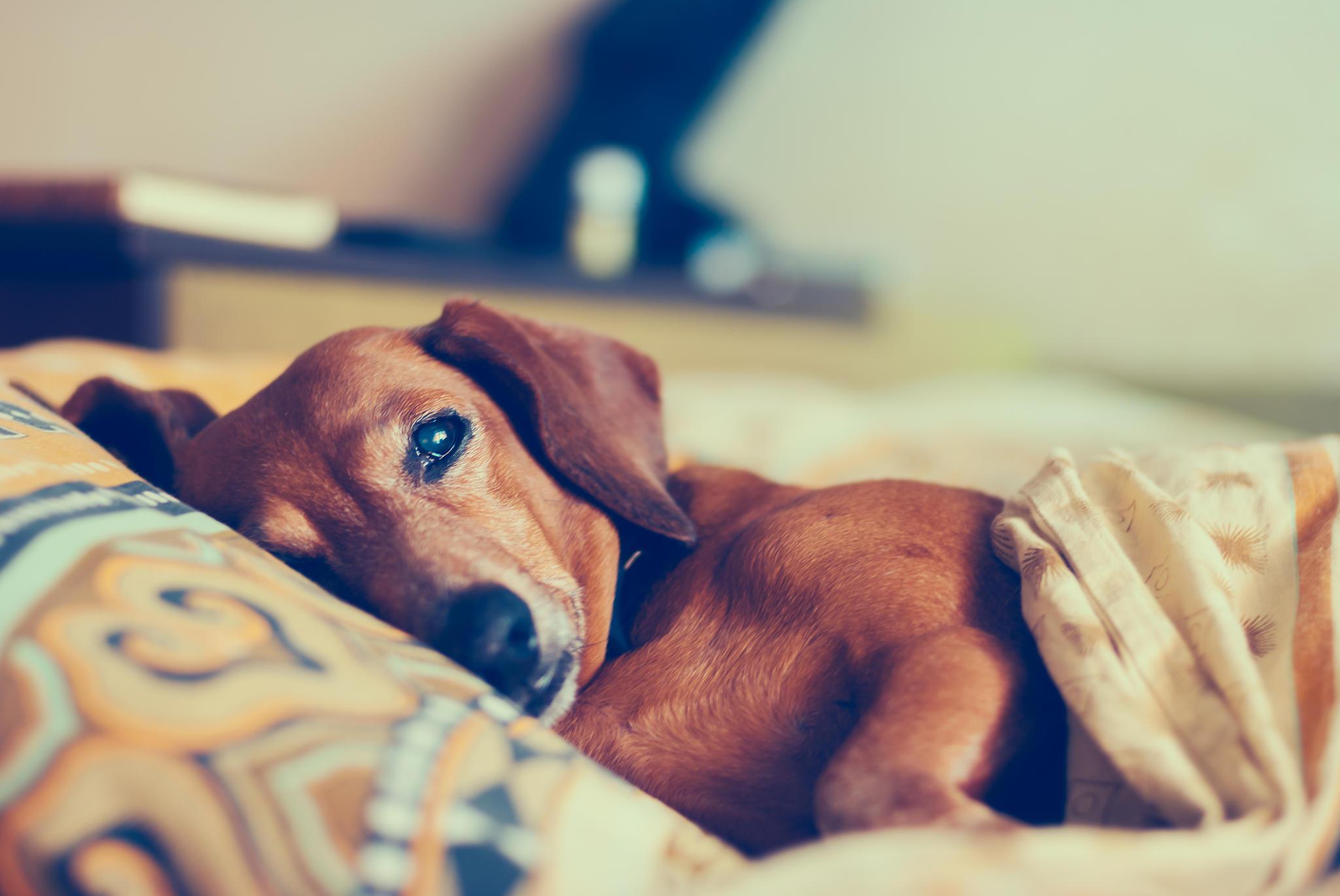 Hund Schlaftabletten Einschläfern