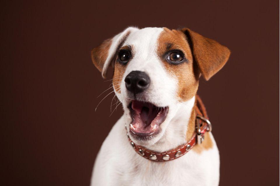 Zauberer legt Hunde mit genialem Trick rein. Die Reaktionen sind zum Kaputtlachen!