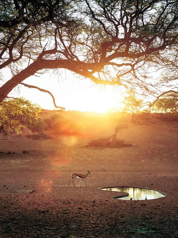 Wasserloch und Antilope