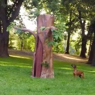 Verstecke Kamera filmt Hund