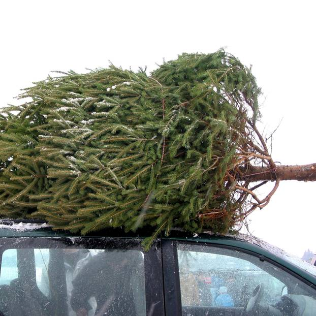 Weihnachtsbaum entsorgen - Tannenbaum auf Autodach