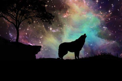 Indianische Sternzeichen: Ein heulender Wolf vor einem bunten Nachthimmel