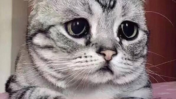 Luhu, die traurigste Katze der Welt