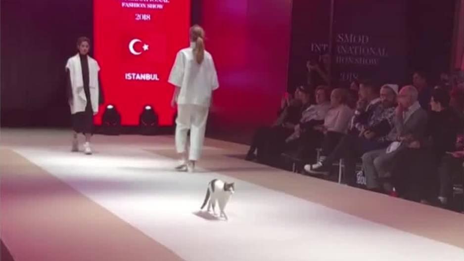Catwalk im wahrsten Sinne des Wortes