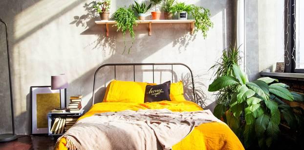 Pflanzen im Schlafzimmer: Pflanzen über dem Bett