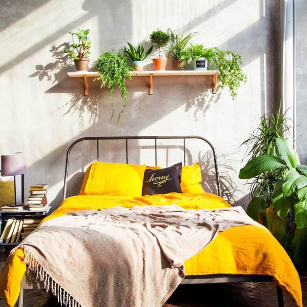 Pflanzen im Schlafzimmer - darauf solltest du achten ...