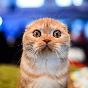 Bußgeld: Kastrationspflicht für Katzen