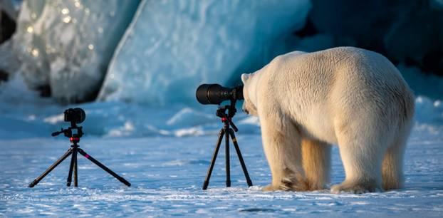 """Wildlife PhotograBaer"""