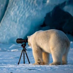 """Wildlife PhotograBaer"""