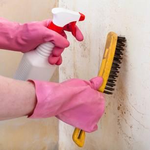 Schimmel an der Wand: Schimmel mit Bürste behandeln