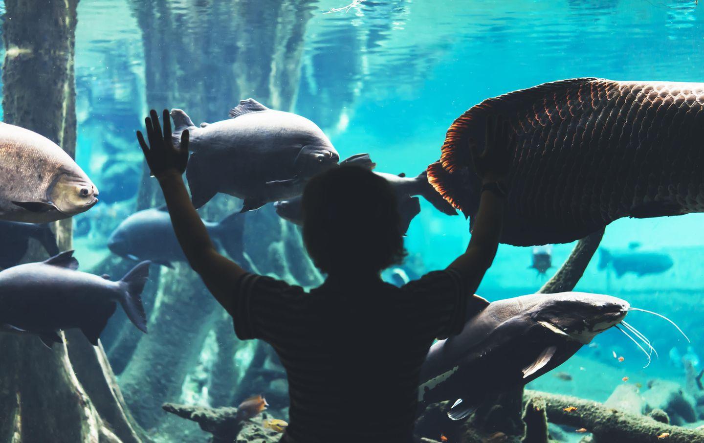 Barcelona mit Kindern: Das Aquarium