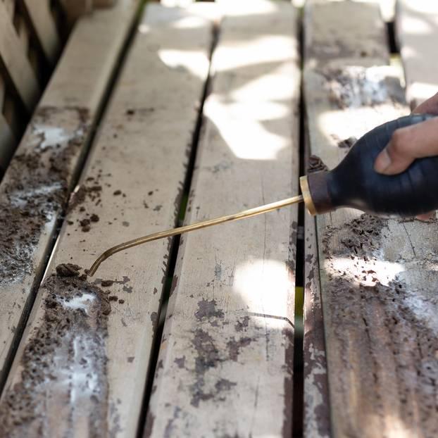 Termiten bekämpfen: Termiten auf einer Bank loswerden