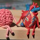 Was ist Sapiosexualität?: Gehirn und Herz halten Händchen