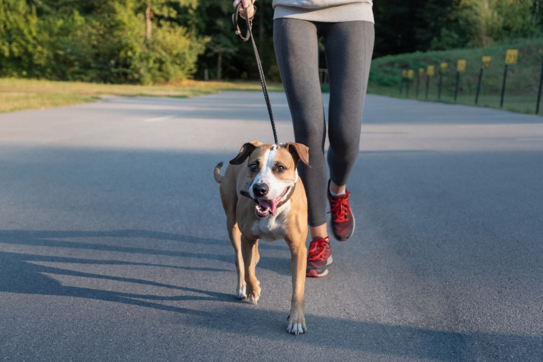 Workout mit Hund:  Frau joggt mit Hund