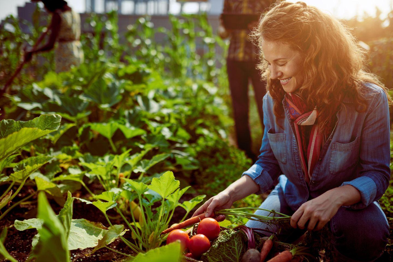 Frugalismus - Frau erntet Gemüse im Garten