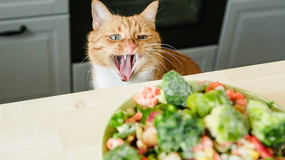 Strafen für vegane Tierhalter?