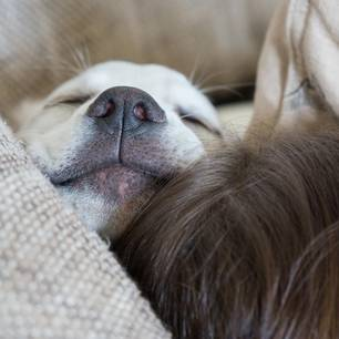 Hunde im Bett schlafen lassen: Frau und Hund unter der Bettdecke