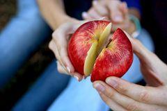 Kleinigkeiten, die glückliche Paare tun, ohne darum zu bitten: Zwei Partner teilen einen Apfel