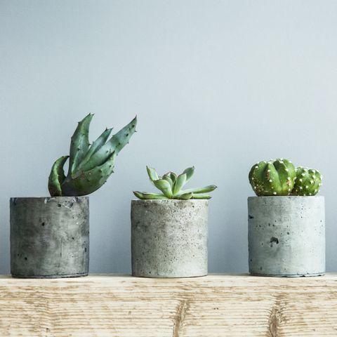 Beton-Deko: Ideen und Anleitungen zum Selbermachen: Vier Betonvasen mit Sukkulenten stehen nebeneinander auf einem Holzregal
