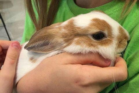 Keiner wollte dieses Baby-Kaninchen – aus einem traurigen Grund