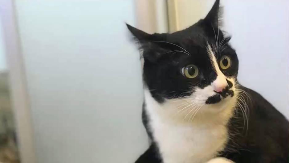 Die Katze mit der wohl verstörendsten Stimme
