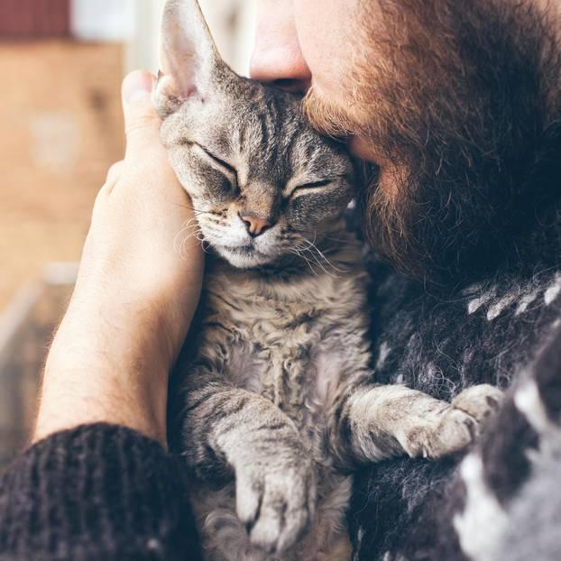 Katze wählt Notruf: Katze auf dem Arm eines Mannes