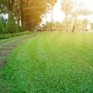 Rasenpflege im Frühjahr: Gepflegte, grüne Rasenfläche