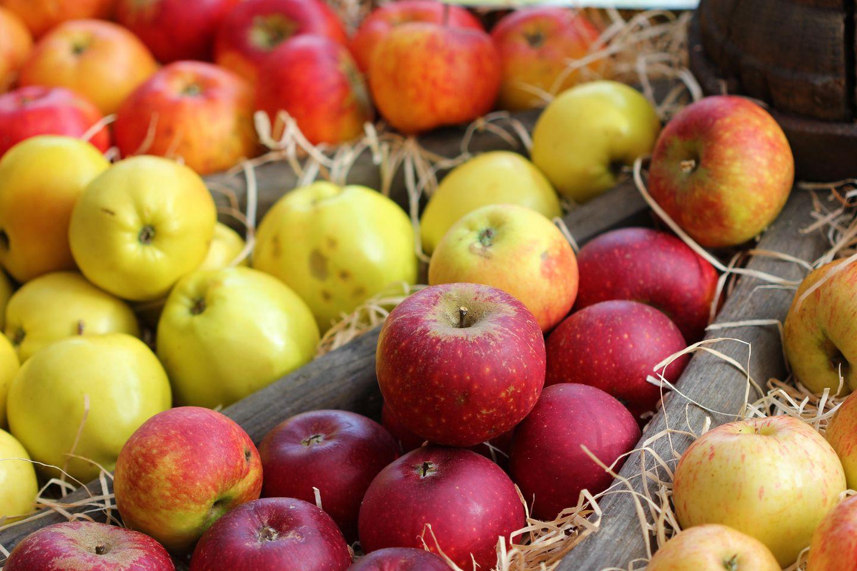 Apfelsorten: Verschiedene Äpfel