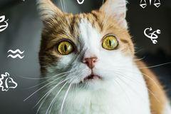 Katzenhoroskop 2019: Eine Katze guckt in die Zukunft