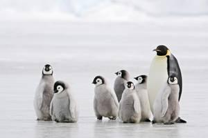 Das Pinguin-Prinzip: Warum wir uns im Winter schön auf die Pelle rücken sollten