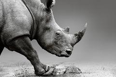 Diese Tiere werden in diesem Jahr für immer von der Erde verschwinden