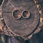 Silberhochzeit – Ideen, Glückwünsche und Bräuche: Zwei Eheringe auf einem Baumstumpf