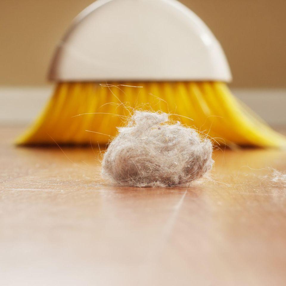 Hausstaubmilben bekämpfen – Feger mit Hausstaub