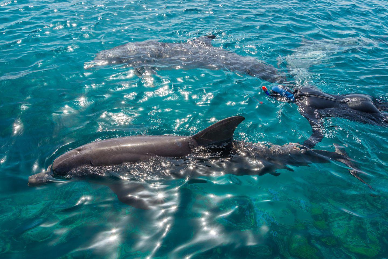 Mit Delfinen schwimmen: 2 Delfine mit einer Person im Meer