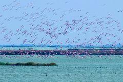 Emilia-Romagna: Flamingos gucken im Po-Delta
