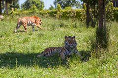 Emilia-Romagna: Auf Safari gehen