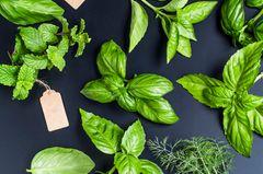 Küchenkräuter: So einfach könnt ihr sie zu Hause selber ziehen