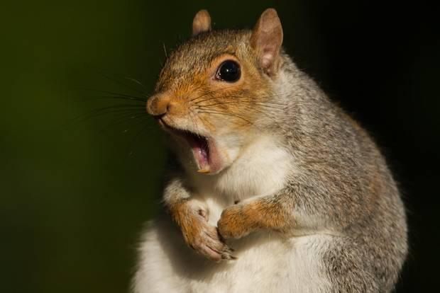 London: Eichhörnchen essen liegt im Trend!